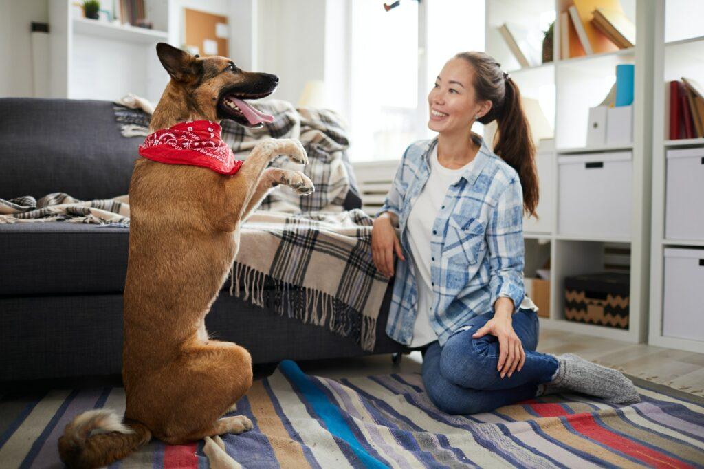 Hundetraining von Zuhause