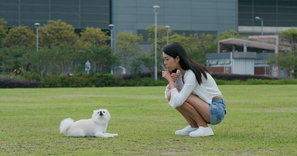Hund richtig erziehen lernen
